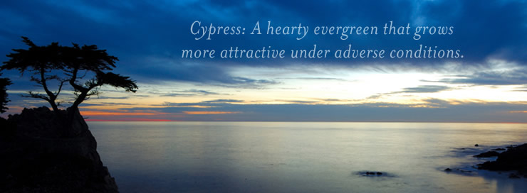 Cypress: A hearty evergreen...
